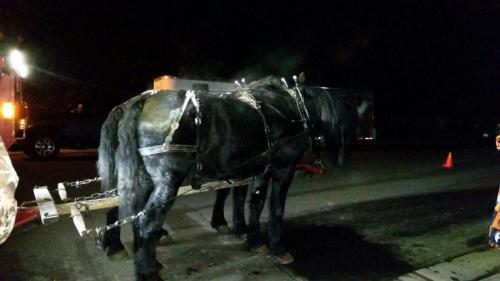 Santas Horses